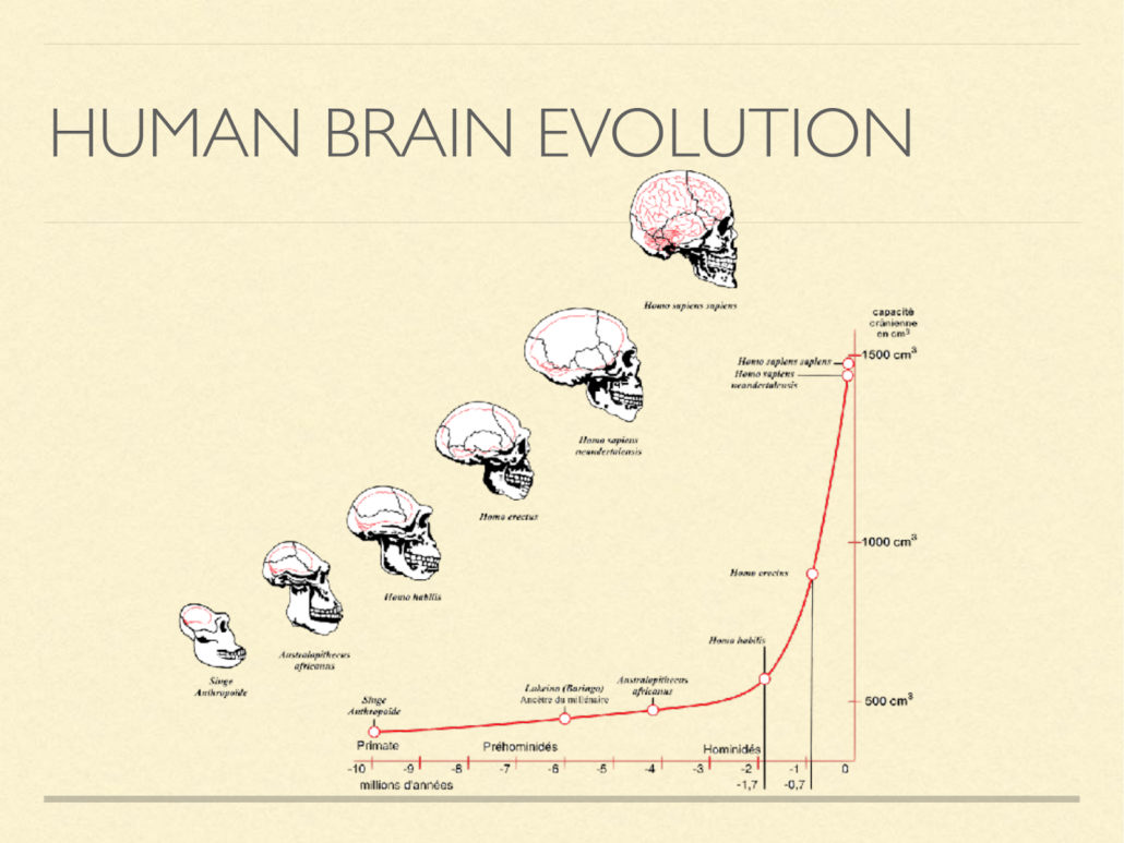 human brain evolution