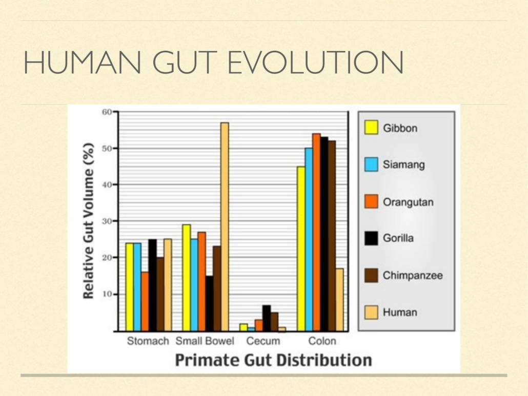 human gut evolution