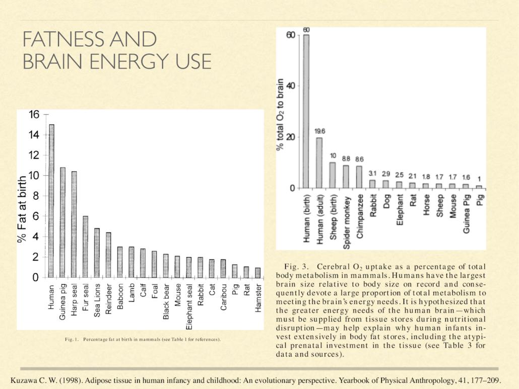 fatness and brain energy