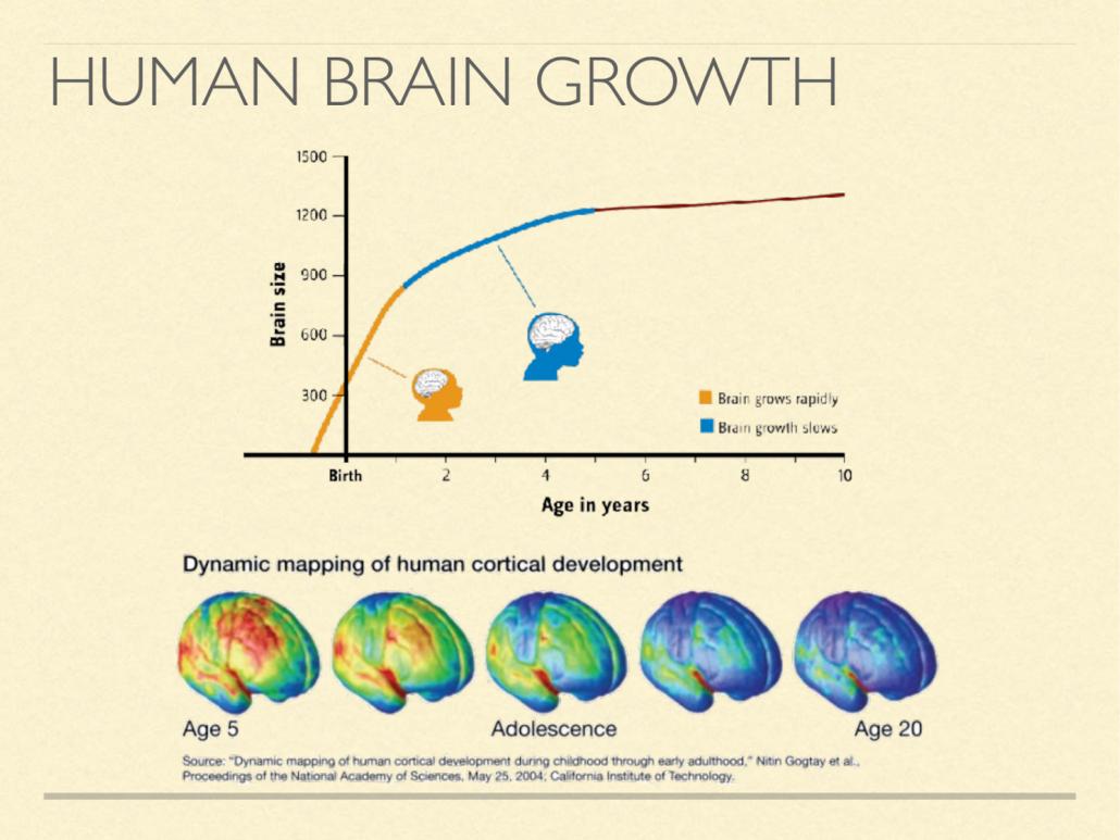 human brain growth
